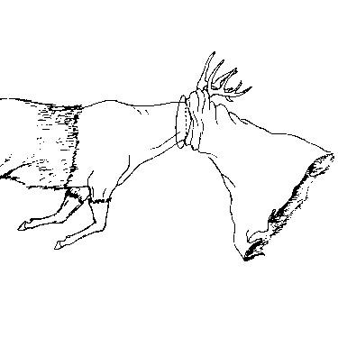 Deer Cape