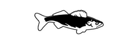 Fish Mount